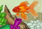 Play Shining Gold Fish Game