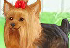 Play Cute Yorkie Game