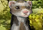 Play Furry Ferret Game