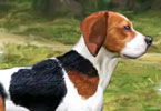 Play Beagle Training Game