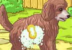 Play Cute Poodle Puppy Game