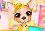 Cute Chihuahua Caring