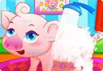 Pet Piggy Care