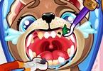 Puppy Teeth Dentist