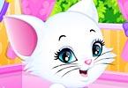 Kitty Spa Makeover